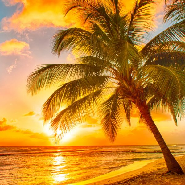 photo of a orange sunset on a beach with a large palm tree